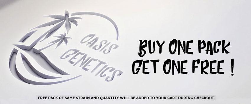 Oasis Genetics Seeds