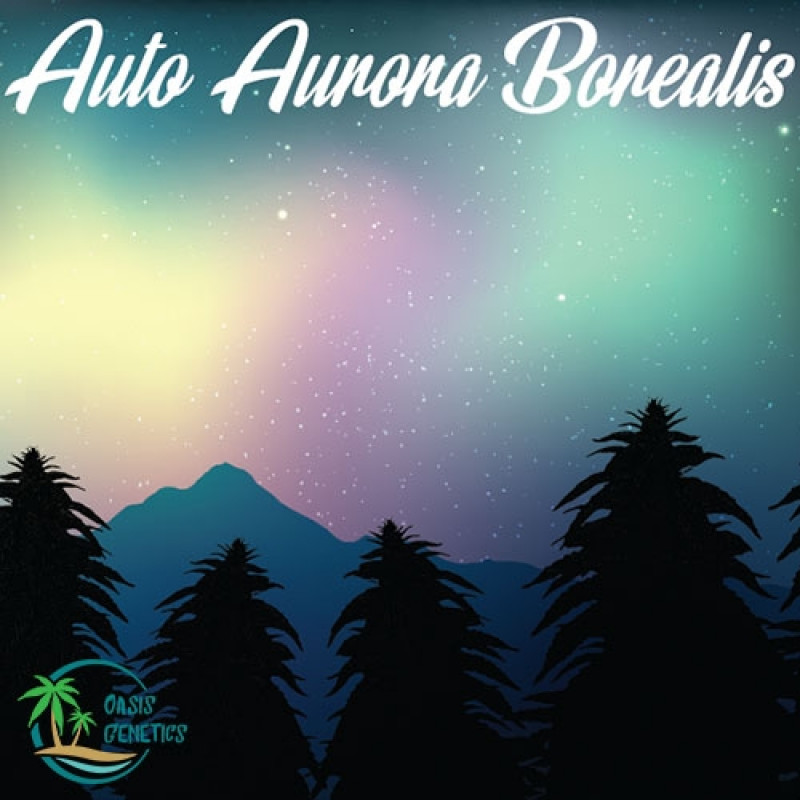 Auto Aurora Borealis Feminized Seeds