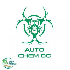 Auto Chem OG Feminized Seeds