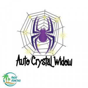 Auto Crystal Widow Feminized Seeds