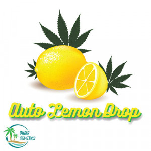 Auto Lemon Drop Feminized Seeds