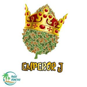 Auto Emperor J Feminized Seeds