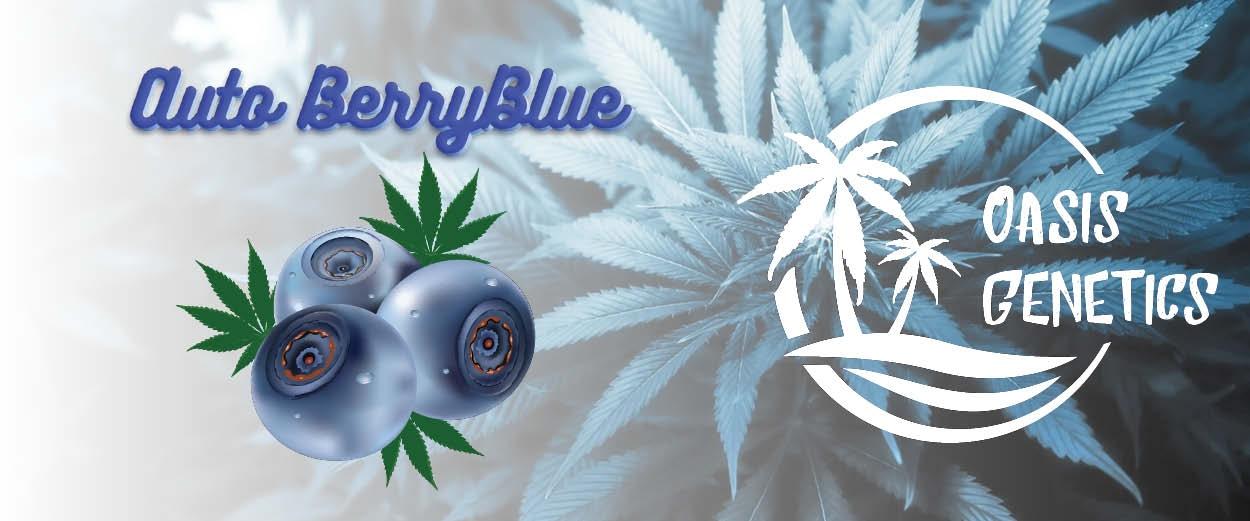 Auto BerryBlue Feminized Seeds