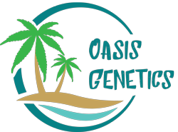 Buy Cannabis Seeds at Oasis Genetics Seedbank